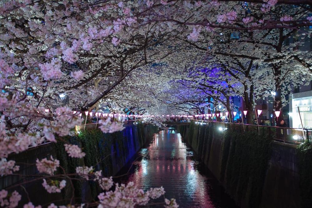 Nakameguro Sakura Cherry Blossom Festival