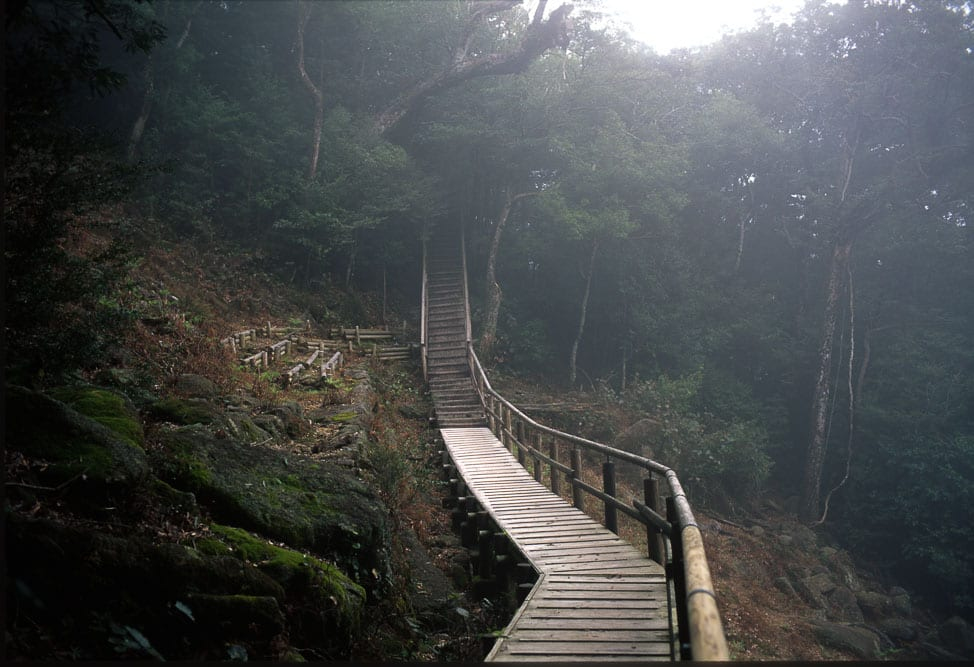 yakushima, the best hiking in japan