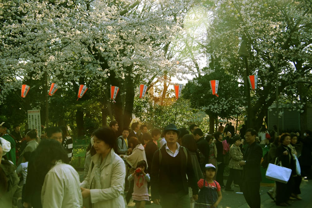 https://www.thepassportlifestyle.com/a-day-at-nakameguro-whimsical-cherry-blossom-festival/