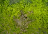 dinosaur footprints on the isle of skye