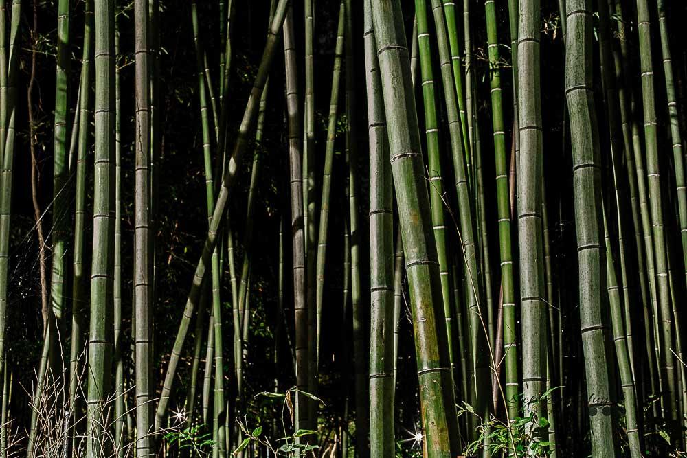 Kamakura Zen Buddhist Temples Hiking Bamboo Forest